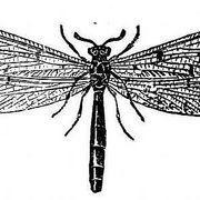 How to Make Termite Spray to Kill Termites | eHow