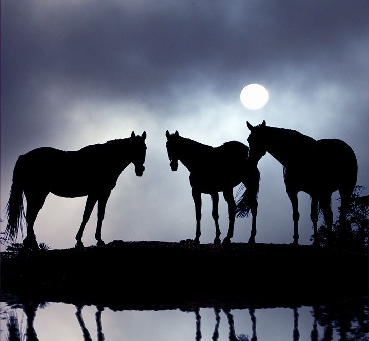 horses in the moonlight