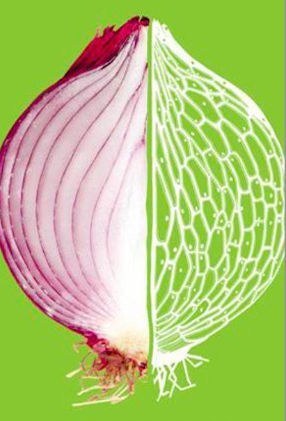 #foodmi La mostra al Museo Civico di Storia Naturale, Food. La scienza dai semi al piatto affronta il tema del cibo tra scenografiche immagini al microscopio, video didattici e giochi interattivi... http://www.milanofree.it/201412075478/eventi/mostre/food_la_scienza_dai_semi_al_piatto.html