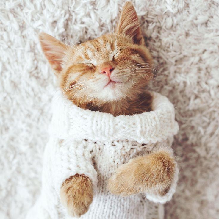 Ммм… пятница ☺ План такой: приятный шоппинг  в Л'Этуаль, наслаждение лакомствами , просмотр фильмов  и полный #relax. Тщательно выполняйте каждый пункт, и по-кошачьи расслабленные выходные вам обеспечены