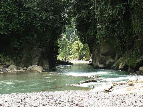 Tangkahan merupakan kawasan yang termasuk dalam Taman Nasional Gunung Leuser, Sumatera Utara. Dengan bentuk tanah berbukit, hutan tropis yang rindang, dan suasana yang sejuk, Tangkahan sangatlah cocok untuk pecinta wisata alam. Kegiatan yang dapat anda lakukan di Tangkahan adalah berenang, trekking, menaiki gajah, masuk goa kelelawar, bermain di air terjun, dan lain-lain.