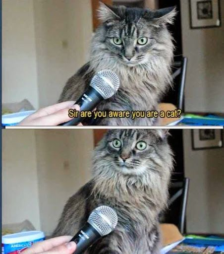 Funny Cat Aware Interview
