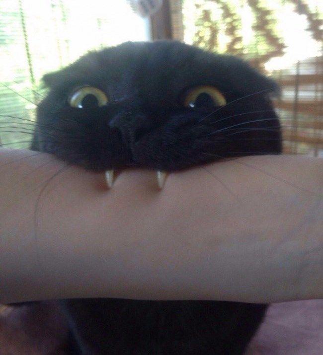 The 21 Funny Cat Pictures