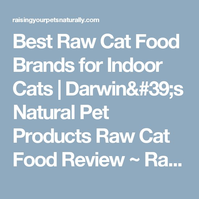 Best Raw Cat Food Brands for Indoor Cats | Darwin's Natural Pet Products Raw Cat Food Review ~ Raising Your Pets Naturally with Tonya Wilhelm
