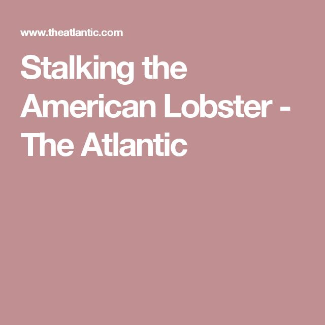 Stalking the American Lobster - The Atlantic