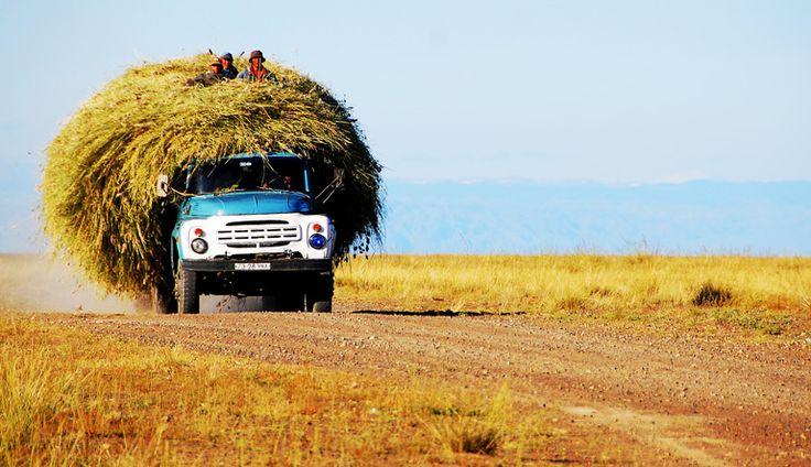 Trasporto fieno (foto Federico Pistone) • www.mongolia.it