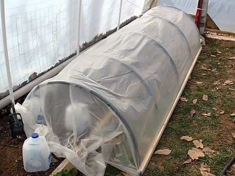 How to do a Simple Plastic Tunnel Cold Frame or Row Cover. Grow salad greens all winter long, to grow out tomatoes and other tender plants, to extend the season for an early Spring start or a late Fall harvest, or even as a screen house to keep birds off of your strawberries or vine borer moths off of your squashes.