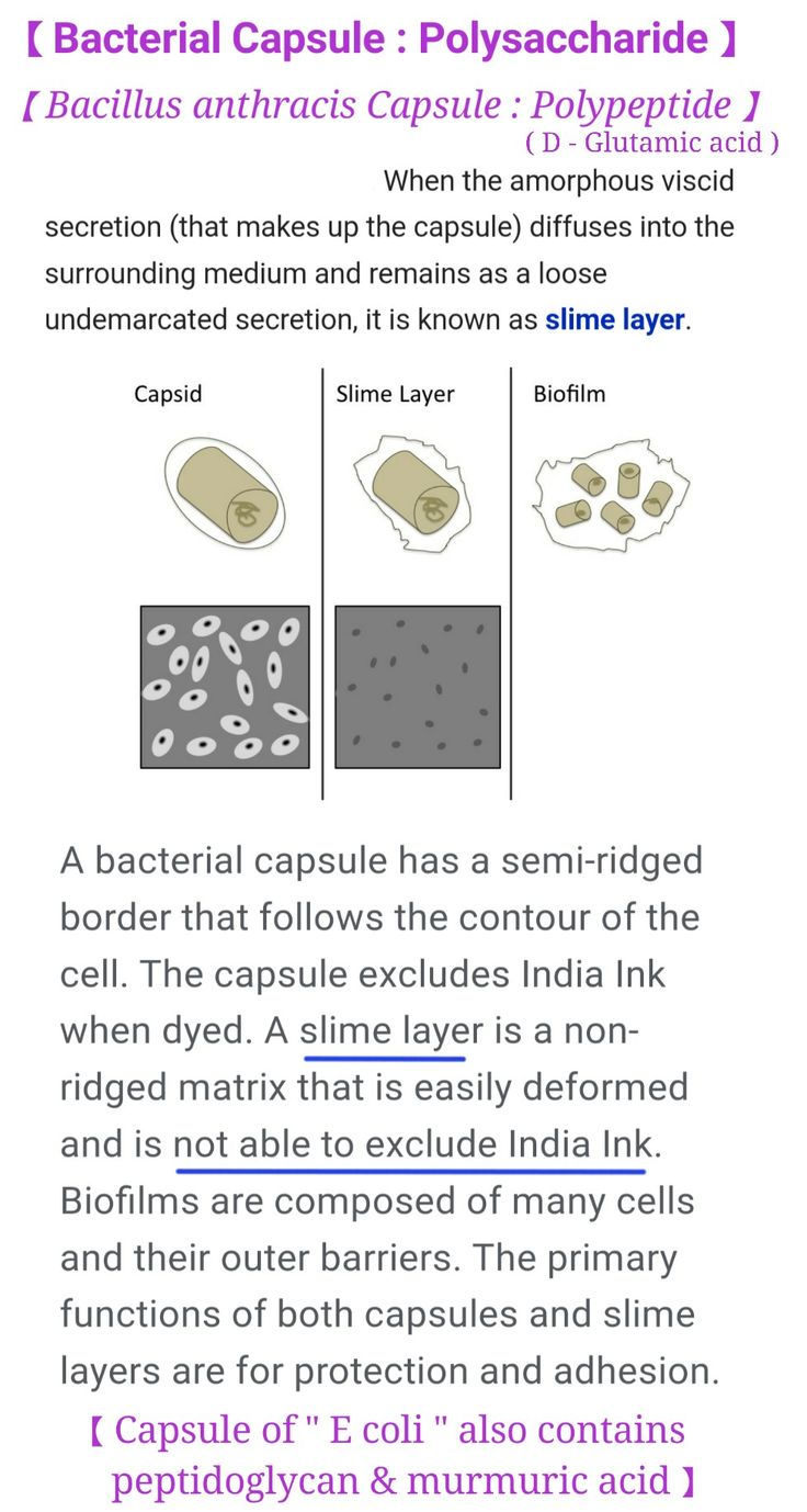 Bacterial Capsule ... #polysaccharide #polypeptide/Peptidoglycan #slime #biofilm [ Bacteria producing biofilm - Gram +ive : Bacillus , Listeria , Staph , Lactic acid bacteria ; Gram -ive : E coli , Pseudomonas ]