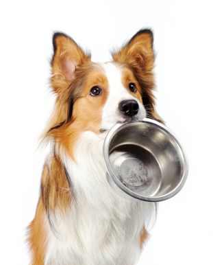 how to find quality dog food   drjessespetfood.com