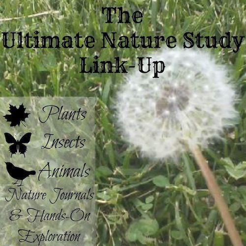 Nature Study - auyouth.com