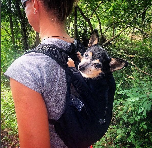 Best and safest dog carrier around! K9 Sport sack lets you hike with your small dog and they don't get tired!