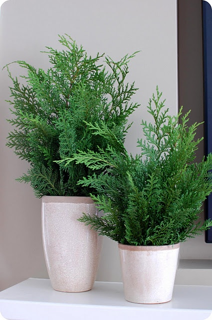 Handmade Holidays. . .Easy Cedar Branch Topiaries: