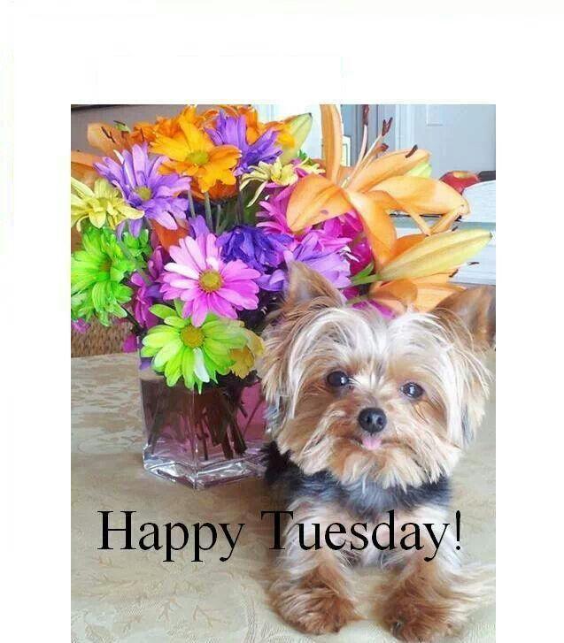 Happy Tuesday!!!