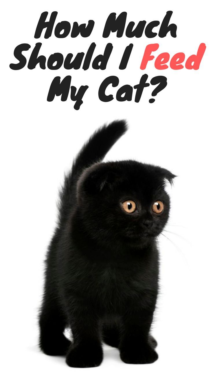 How Much Should I Feed My Cat Funny cats, Cat nutrition