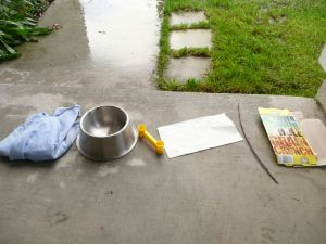 Rainy Day Fun: Science Experiment for Kids from A Mom with a Lesson Plan