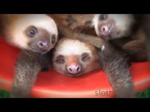A bucket of sloths