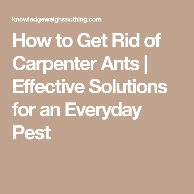 how to get rid of carpenter ants in your home