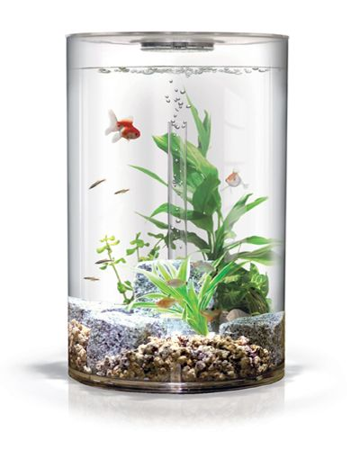 My next fish tank.