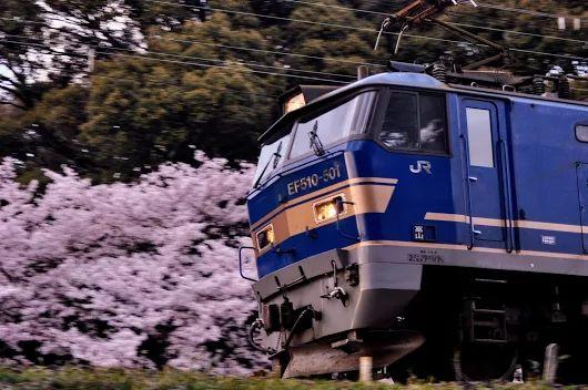 シーズンが終わる前に… 青ゴトー桜流し  東海道線 篠原〜野洲