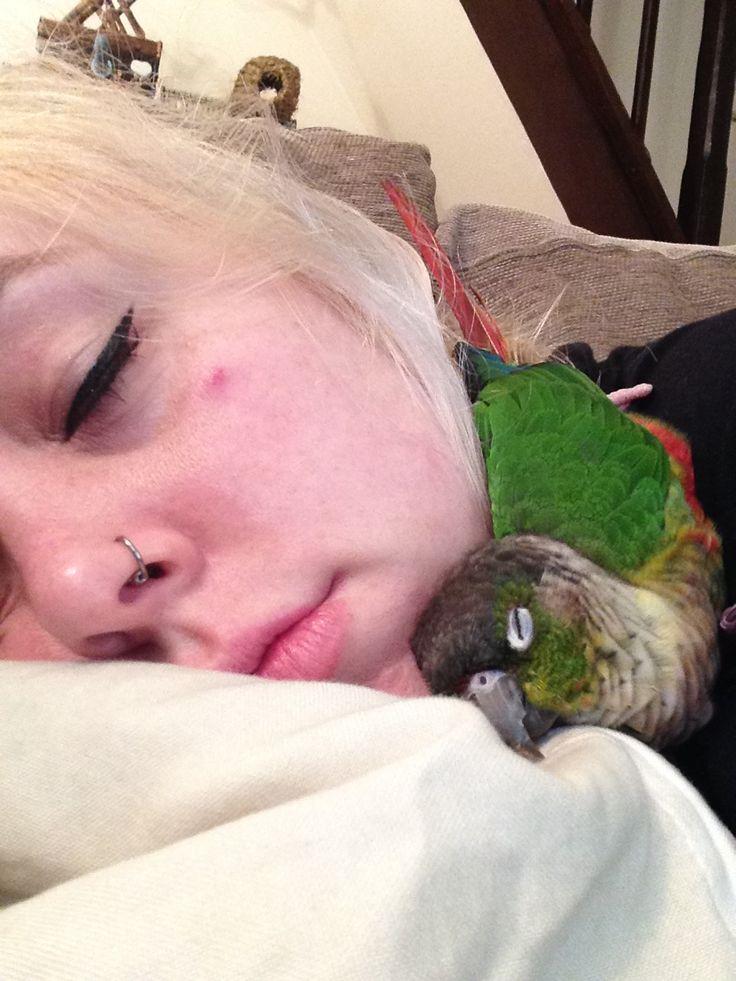 Me asleep with my greencheek conure
