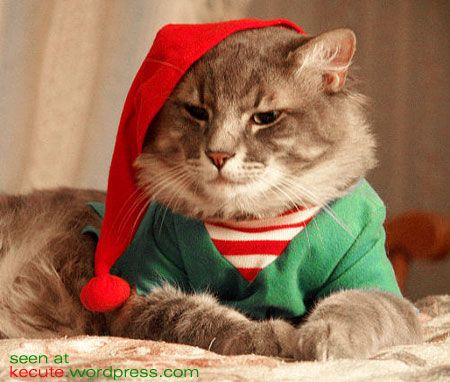 Pinkpackrat@Play: A Warning About Pets Dressed as Santa