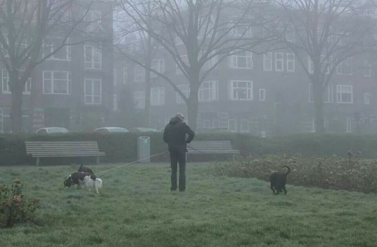 A man walking his tree dogs in the mist