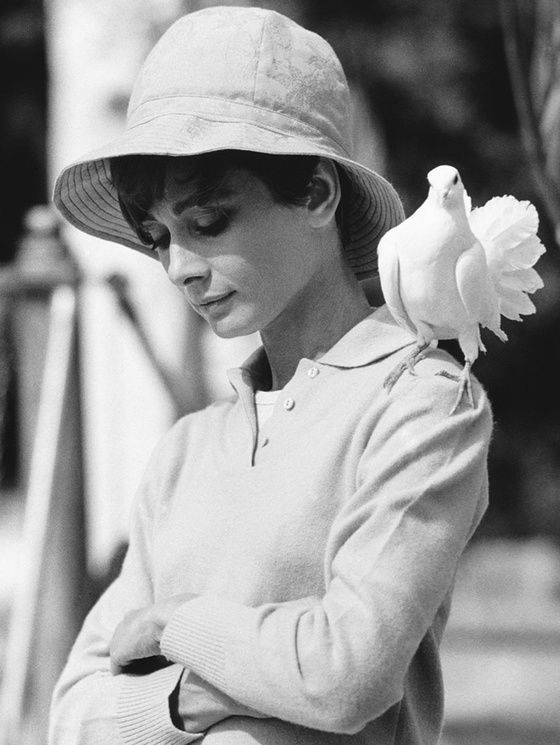 Audrey Hepburn by the photographic legend Terry O'Neill.