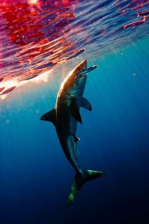 yo estoy miedo de los tiburones!