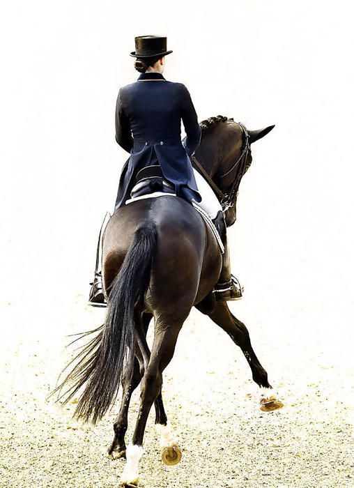 Dressage - so beautiful to see - absolutely amazing that these incredible creatures can do what they do!