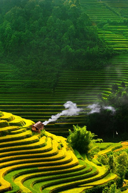 Vietnam rice terraces - I don't know the exact location of this photo, but it clearly shows the beauty of this South East Asian country