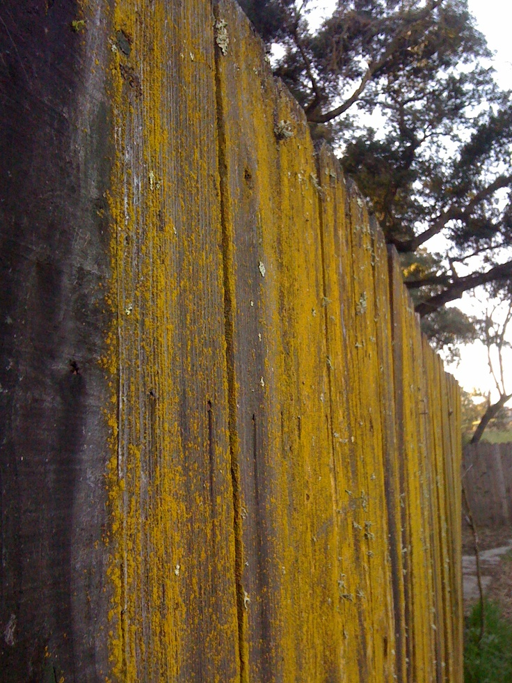 85 best Old fences images on Pinterest | Old fences, Res life and ...