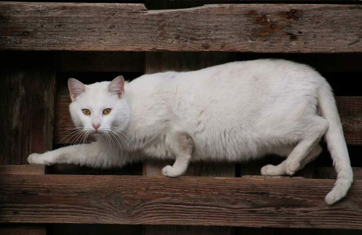 gatos-domesticos