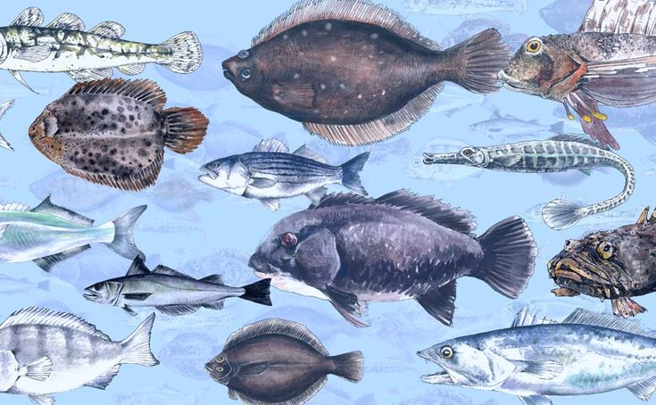 The Great Fish Count | World Science Festival