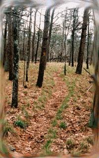 AL Pinhoti trail guide