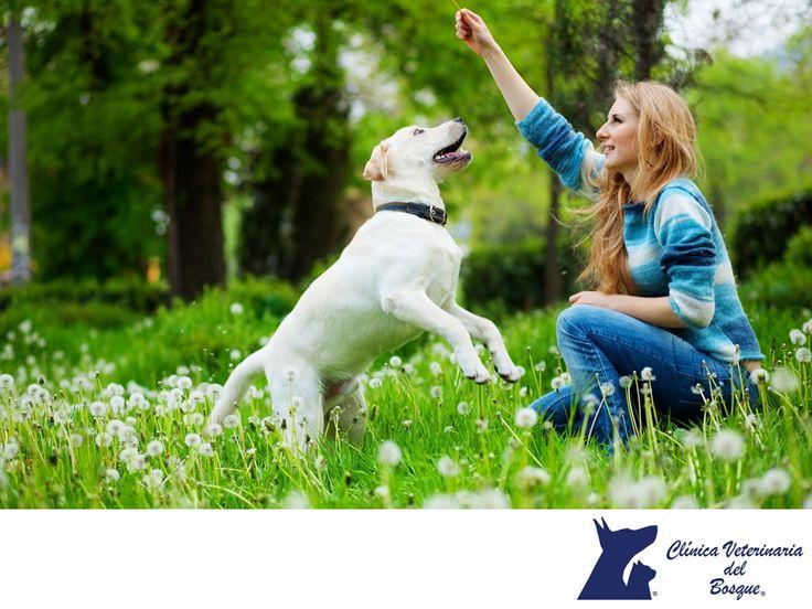 CLÍNICA VETERINARIA DEL BOSQUE. Mantener en forma a nuestra mascota es importante para su salud física y mental. Recrearse en el parque, en la calle o en el campo lo mantendrá activo y en buen estado, ya que fortalecerá sus músculos, patas, corazón y pulmones, proporcionándole fuerza, agilidad y destreza en la coordinación de sus movimientos y actividades.  En Clínica Veterinaria del Bosque, te invitamos a comunicarse con nosotros al teléfono 5360 3311 para conocer todos nuestros servicios…