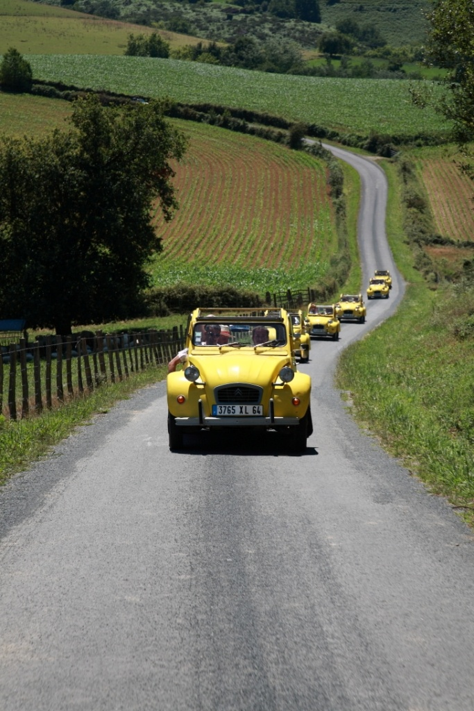 Yellow Citroen 2CVs in convoy #happiness