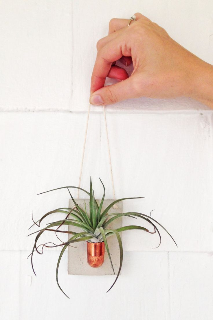 Copper And Cement Air Plant Holder. Small Wall Hanging To Display Your Air  Plants And Add A Little Living Decor To Your Home! Perfect Addition To Any  Modern ...