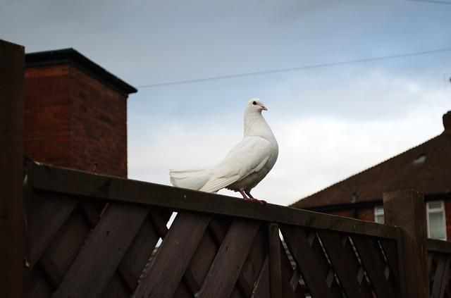 "Will you say COLUMBA, ""my dove"", to your beloved ones? #lovelysundays #love #Latin"