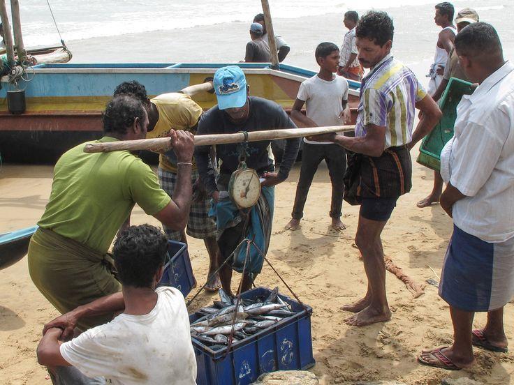 Fischer auf Sri Lanka