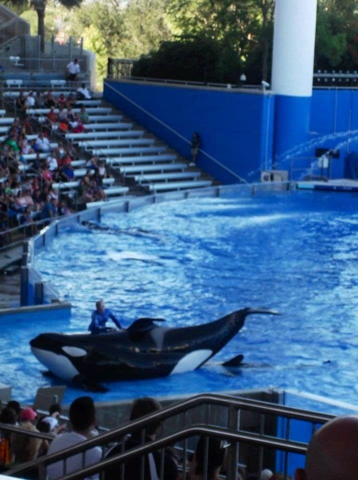 Shamoo!! Sea world - Florida
