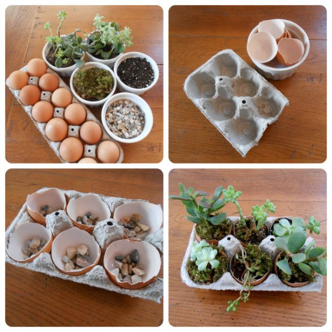 DIY succulent garden in egg carton. #Easter #gardening #DIY #upcycling #eggs