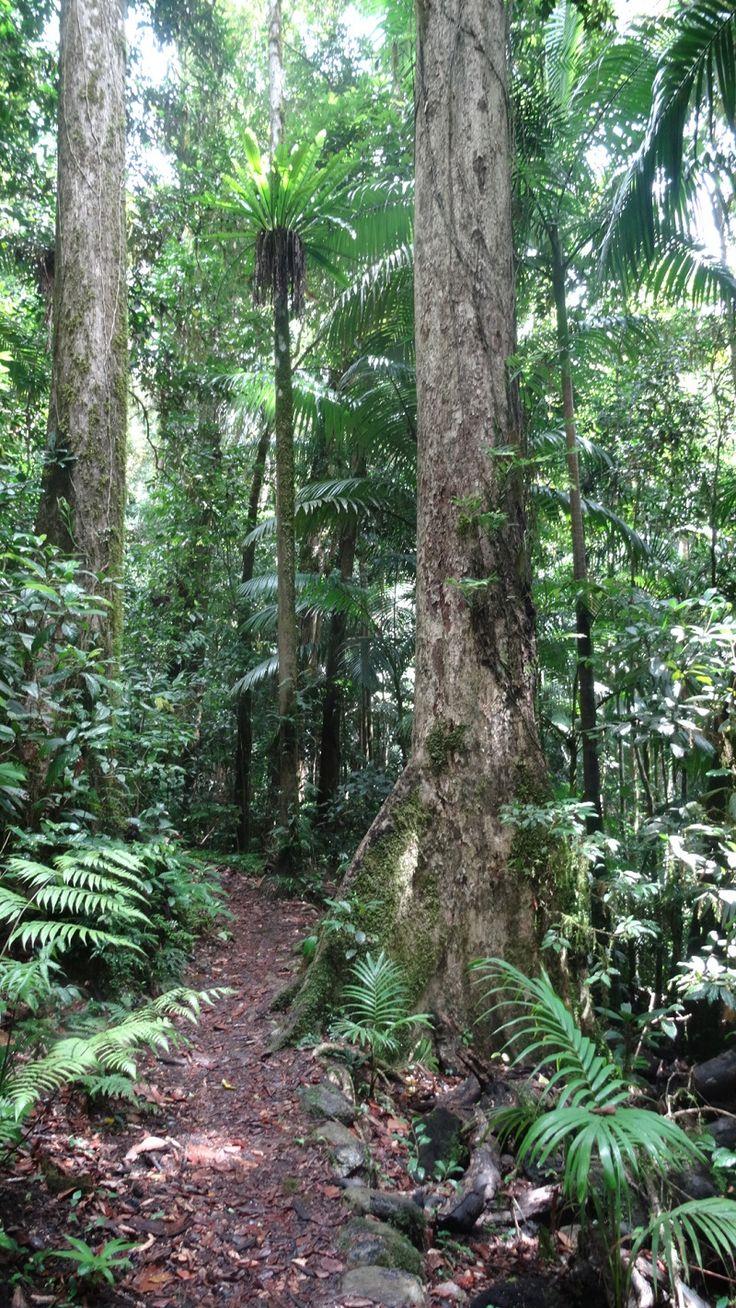 Enjoy a stroll through one of the rainforest bush walks at Eungella.