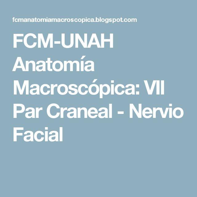 FCM-UNAH Anatomía Macroscópica: VII Par Craneal - Nervio Facial