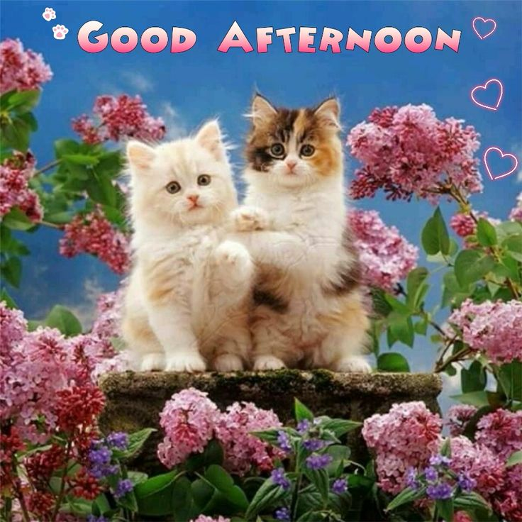 Good Afternoon sister and all,have a nice afternoon, xxx❤❤❤☺