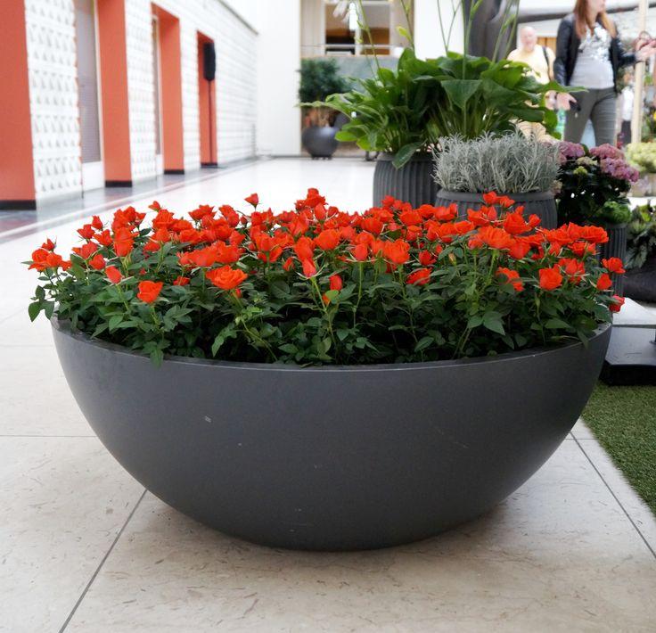 #trend #Denmark #floradania #blomsterfestival #odense NorthØ composite planters