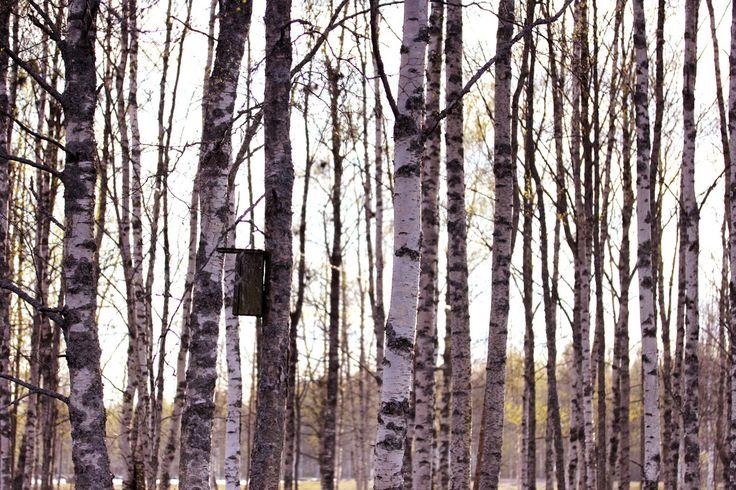 Finland forest | by Siniirr