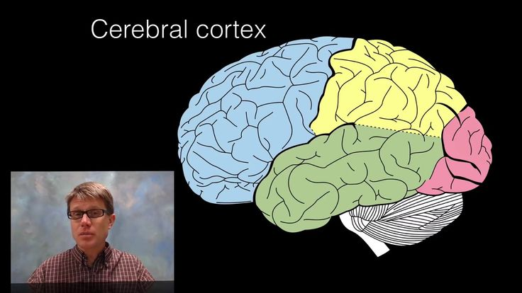This video explains the structures and functions of seventeen major parts of the brain. This begins with a quick discussion of brain evolution and ends with a review of the major parts presented inside the brainstem, cerebellum, thalamus, and cerebrum.  Watch more here on how to Reboot Your Brain! Click here to subscribe. https://www.youtube.com/channel/UC3PxdPFBS77KYttTL6G-DzQ #brainhealing #thinkingfaster #brainfood #affectsyourbrain #brainhealth #brainenergy #controlyourbrain…