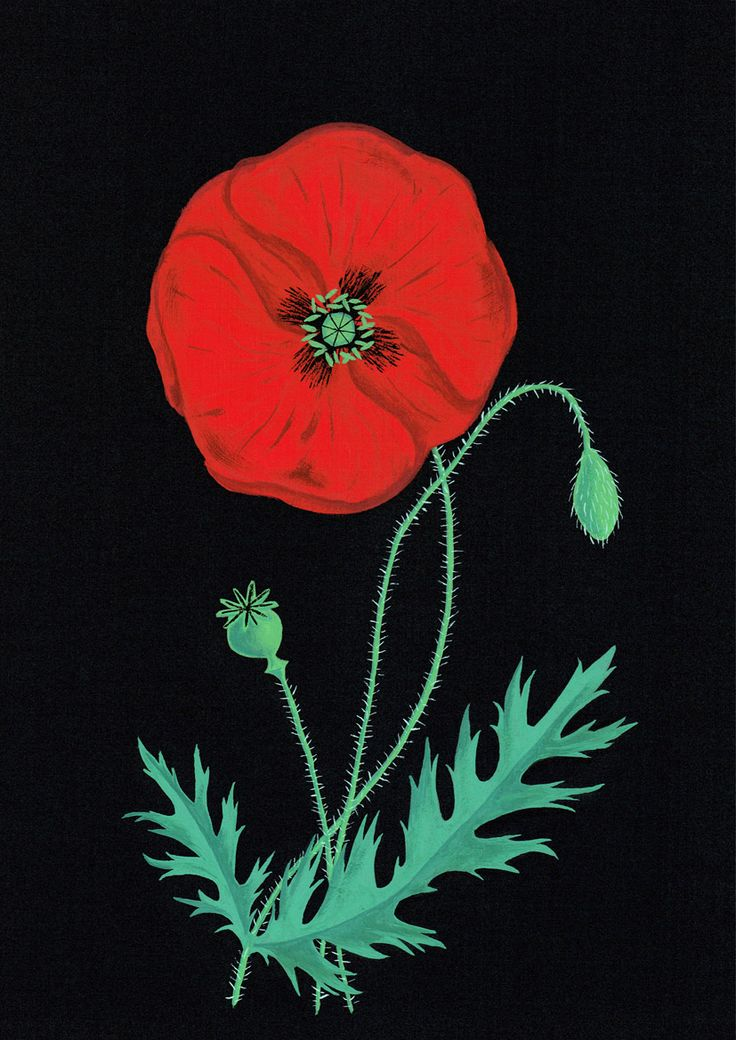 ANZAC card design for the Auckland War Memorial Museum, commemorating the centenary of the Gallipoli campaign.