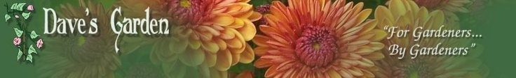 Dave's Garden - Gardening Community -  the hands-down favorite website of gardeners around the world. Chat w/other gardeners & identify your plants, pests, birds, and butterflies.