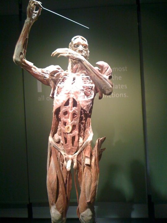 Current BODY WORLDS exhibitions worldwide – At a glance!